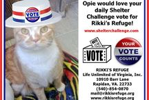 Shelter Challenge / Please VOTE & SHARE for RIKKI'S REFUGE in the Animal Rescue Site SHELTER CHALLENGE every day! Thank you! Vote here: http://www.shelterchallenge.com/web/charityusa/shelter-details?userId=53992&nomineeId=17448
