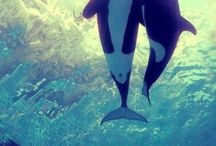 Killer Whalecrush!
