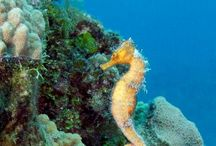 Cruise Grand Cayman / Snorkeling and diving adventures in Grand Cayman with The Lobster Pot Dive Center