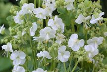 Slug Resistant Plants