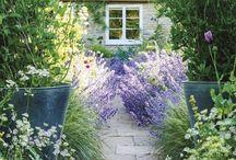 Garden / by Wisteria Urban Country