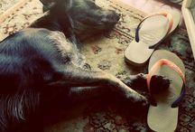 My Dog. My Love. / Bloody!