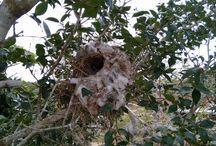 #Ninho de Pássaro
