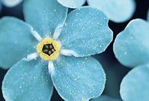 Kukkia (kuolemaan ja elämään)