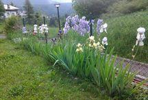 Giardini e orto