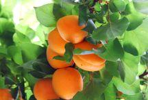 Fruits / by Patricia Silva
