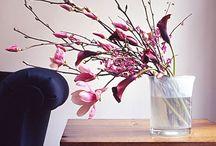 Gardening & Flowers / by Amanda Adams Aldrich