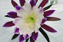 Epiphyllum love