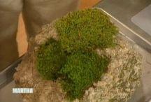 Moss and Miniature Gardens