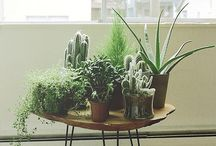 Green thumb. / Pretty plants make everything better.  / by Oh So Lovely Vintage