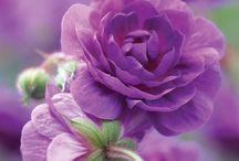 gardens / by Bonni Newton