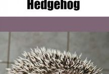 hedgehogg spike