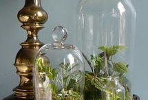 Indoor Gardening / by Janet Strueby