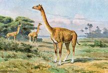 선사시대 동물 배경화면