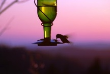 Hummingbirds / by Amber Powers