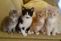 The most beautiful pets ~ Caaats !! ♥