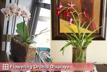 Orchid n plants