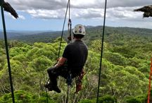 Life in the treetops / Tree climbing and tree houses