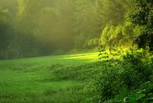 ~a song of green meadows~
