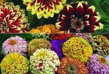 Цветы в саду / Выращивание цветов