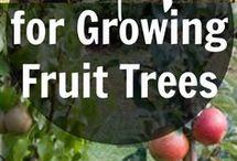 Plantat pomi fructiferi
