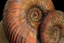 Gemstone, ammonite