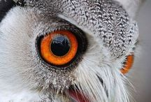 OWLS AND BIRDS