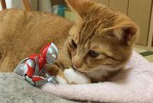 ウルトラマン&Cat♡