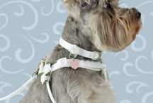 """""""Wedding Dog Collars"""" / Not-to-formal formal wear for the bridal party dog. Simple, elegant, and comfy on the canine, too."""