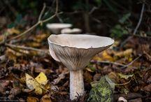 Fungi / Fungi seen on walks in the countryside