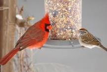 Birds / by Shirley Welsh Szabo