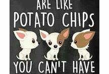 Dogs/Chihuahua's