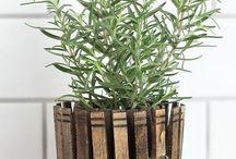 Garden Ideas - Pots / Planters
