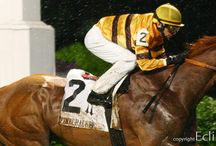 Racing's Stars of 2013 / The horse racing stars of 2013 from coast to coast, from Eclipse Sportswire and Horse Racing Nation.