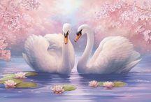 Swan ❤️