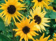 Yard / flowers