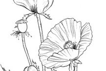 coloring pages / by Elisabeth Doherty