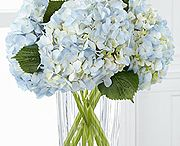 Vera Wang Collection / Vera Wang is known for elegance, style, and romance. Take a look at her beautiful bouquets, blooms, and arrangements.