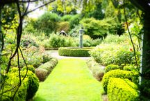 Jardins Anglais / Beautiful flowers in the UK