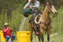 Ideas for obstacle course etc for horses