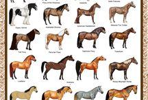 horses|