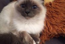 Mon chat, mon Elixir