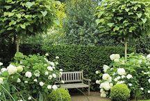 moje zahrada