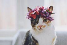Animals + Flowers