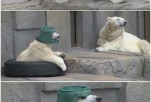 Ursos Fofinhos