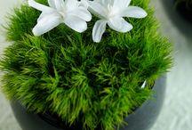 SPA / Spa flowers