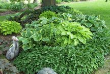 Garden-puutarha
