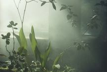 BOTANIC / Groen - greens