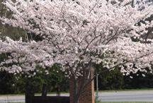 Dekorative Bäume / Pflanzen