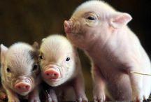 My future animal farm